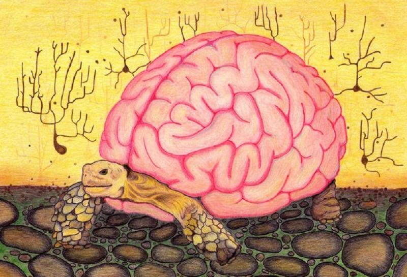 1 heurísticas - 13 - Heurísticas: Os atalhos mentais do pensamento humano