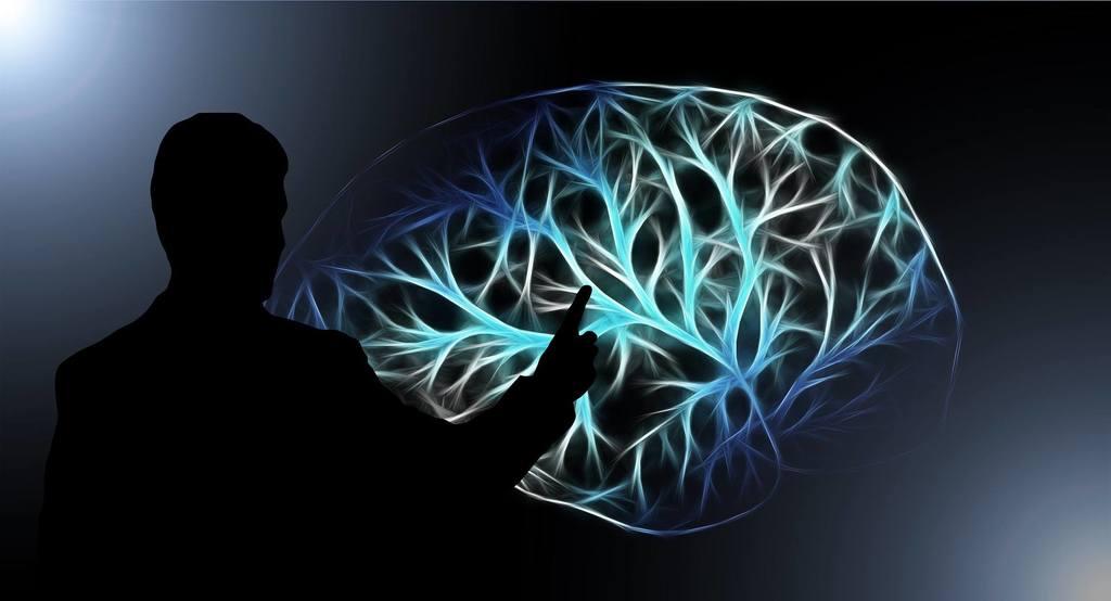 - c  rebros 1024x554 - Nossos três cérebros e como nos comportamos de acordo com cada um deles